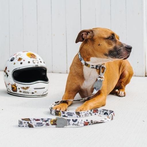 Urban Zee Dog
